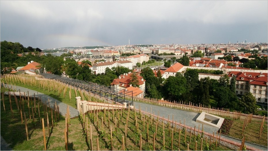 Vignoble Saint-Venceslas à Prague